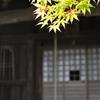 施無畏寺の新緑