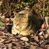 ひなたぼっこな猫
