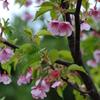 春色、ピンク