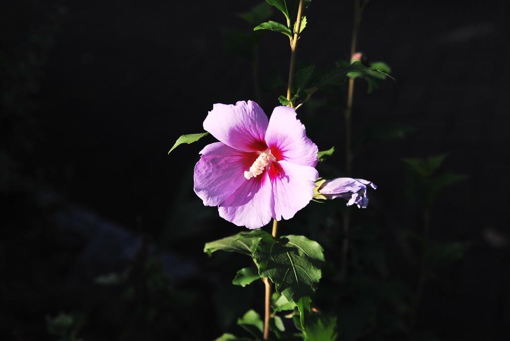 花壇のワキで