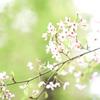 春から新緑