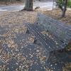 落ち葉とベンチと犬