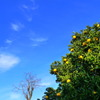 冬枯れの樹と青空