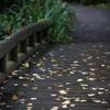 秋の入り口・橋