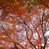 真っ赤に染まる紅葉の幹