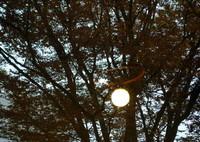 SONY DSC-RX100M2で撮影した(窓辺の秋)の写真(画像)