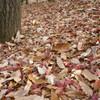 晩秋の彩度