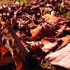 fallen leaves@10.4