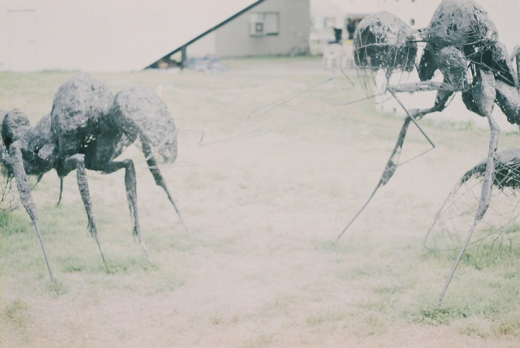 蟻VSあり
