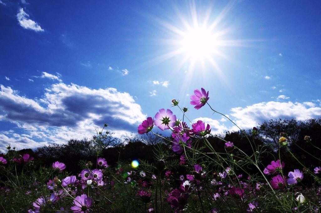 恵みの太陽