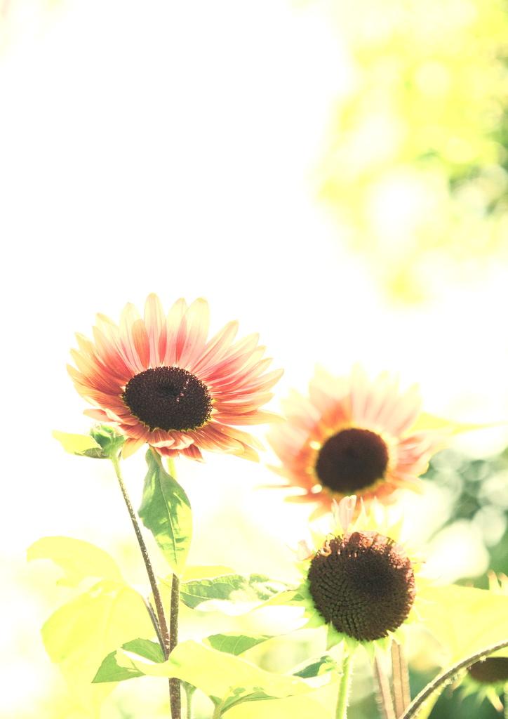 太陽を浴びて・・・