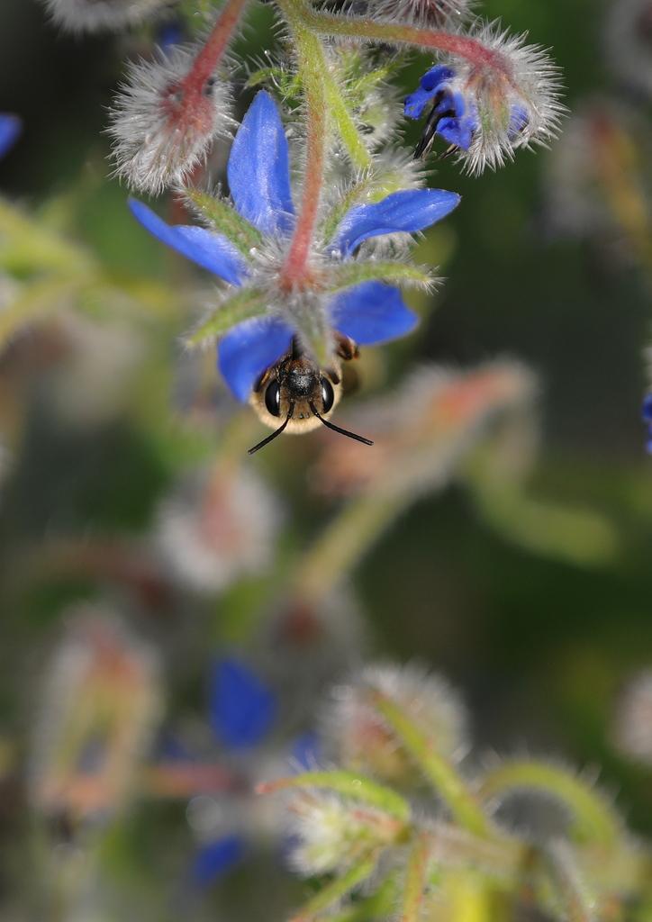 ボク、ミツバチだよ!