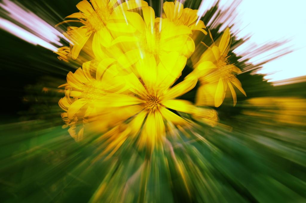 お花でズーミングゥ!