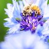 ハイキーなミツバチ