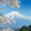 桜と富士とそよ風と…