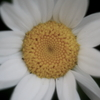 柔らかい花