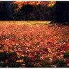 埋め尽くす秋