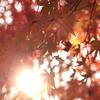 太陽×紅葉