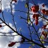 臓物の成る木−1