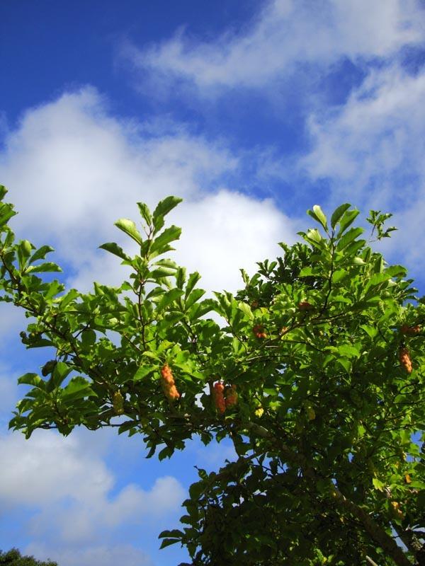 青空と臓物の成る木