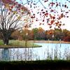 秋の公園風景