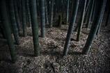 報国寺の幻想竹