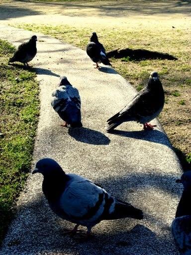鳩とのひととき