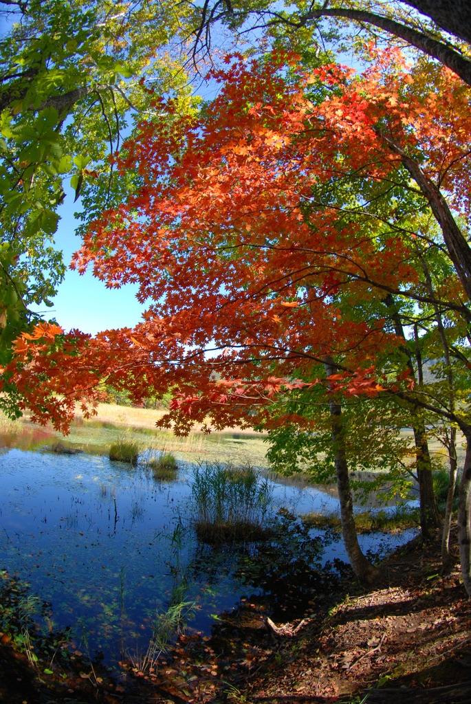 観音沼の秋を