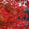 矢祭山公園の紅