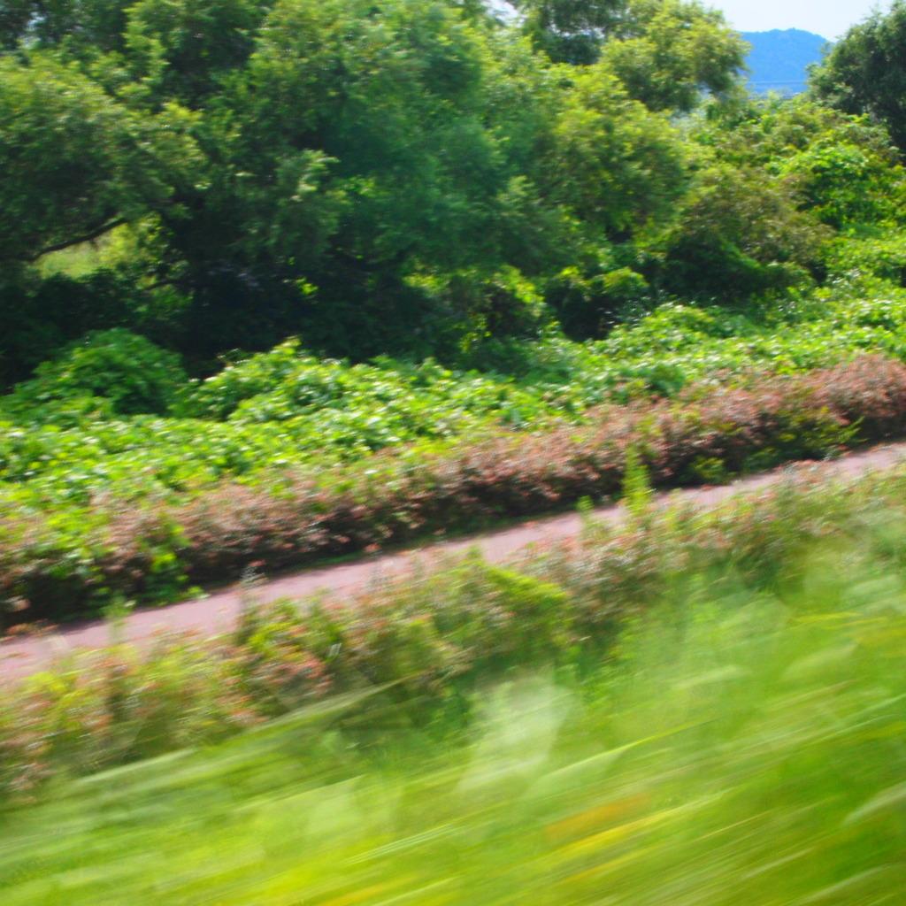 20090823大井川3