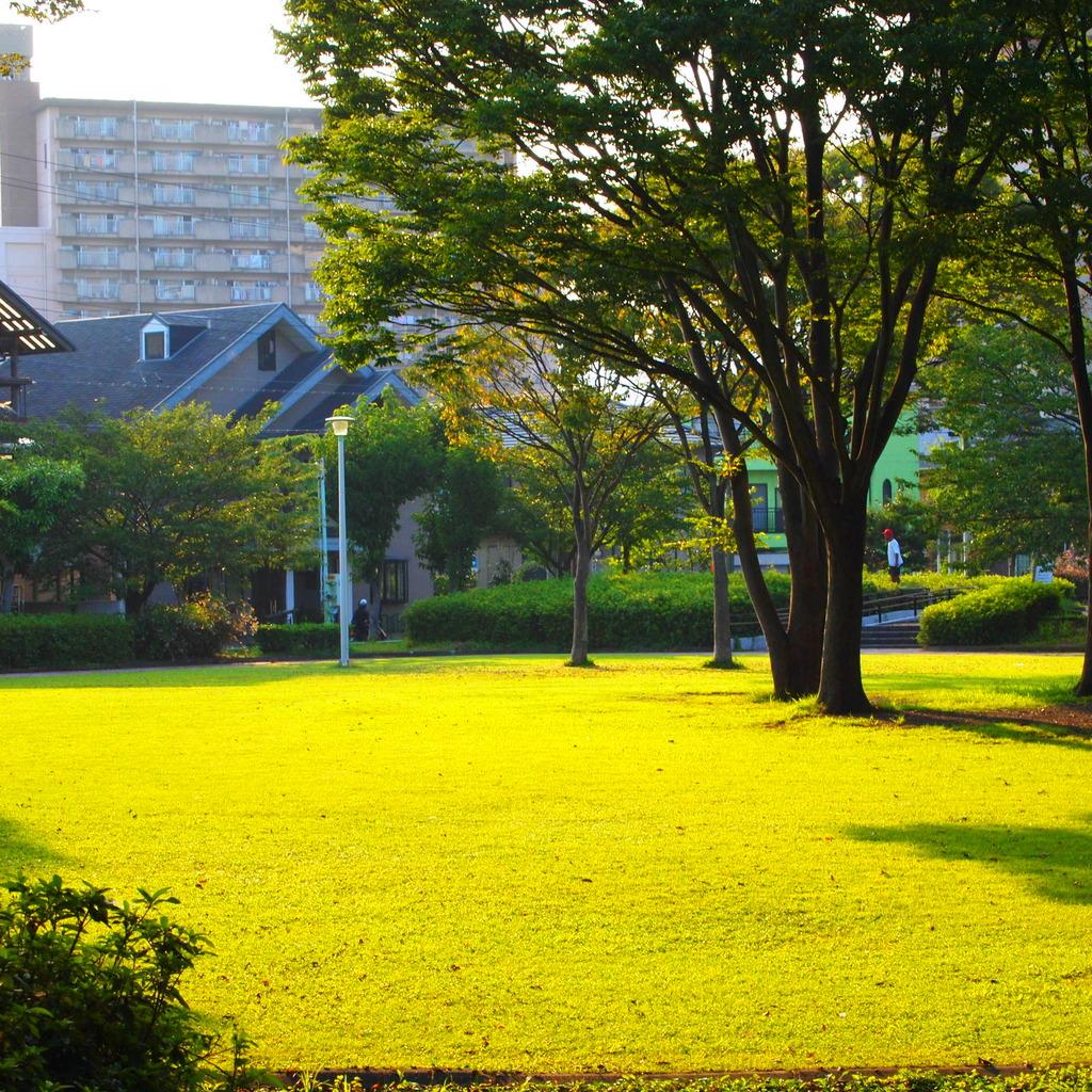 20090817東新田公園3