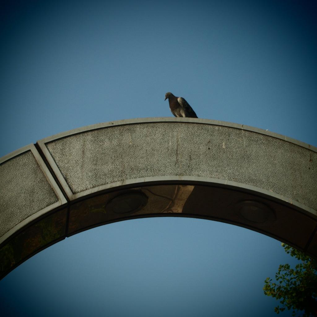 20090823鳩とまっとる