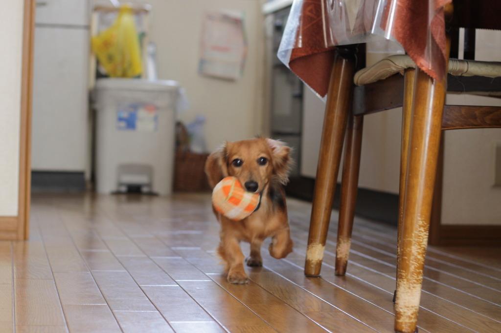 ボールが好き