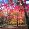 autumn colors Ⅱ