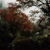 秋雨降る渓谷
