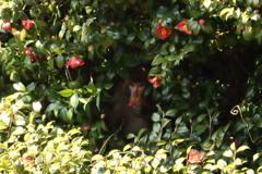 花を食らう猿