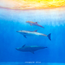 Dolphin ~ 三 ~