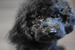 愛犬『ねぎ』