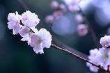 清楚な春の訪れ♫