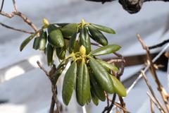 春めく植物