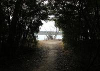 CANON Canon EOS Kiss X5で撮影した(森の出口)の写真(画像)