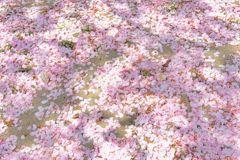 四天王寺界隈 春間近-桜散る2