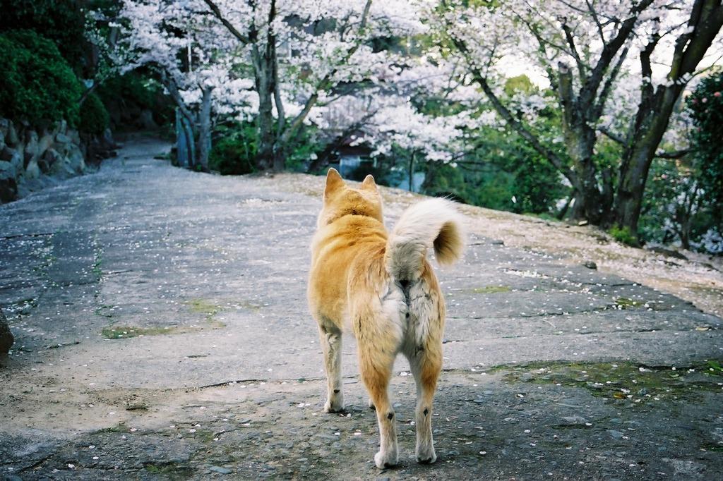 尾道の案内犬