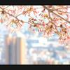 桜と神戸の街