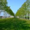 2008_0517_150319