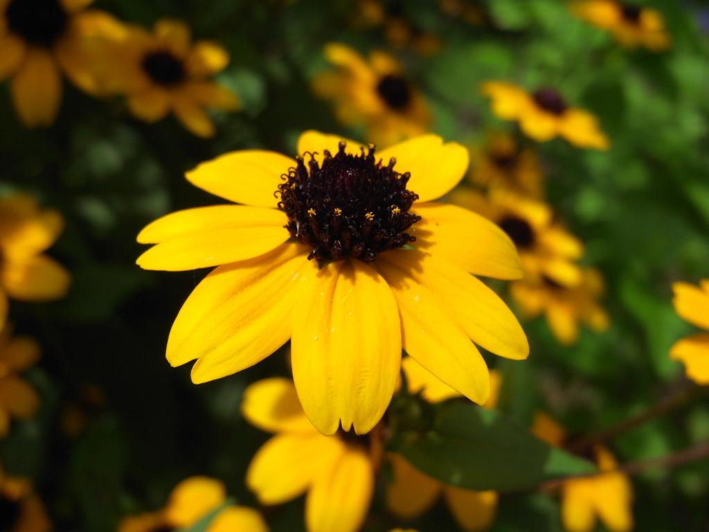 hana_yellow