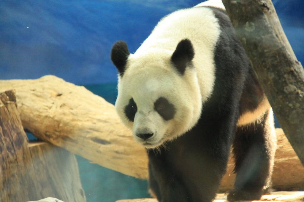 台北動物園