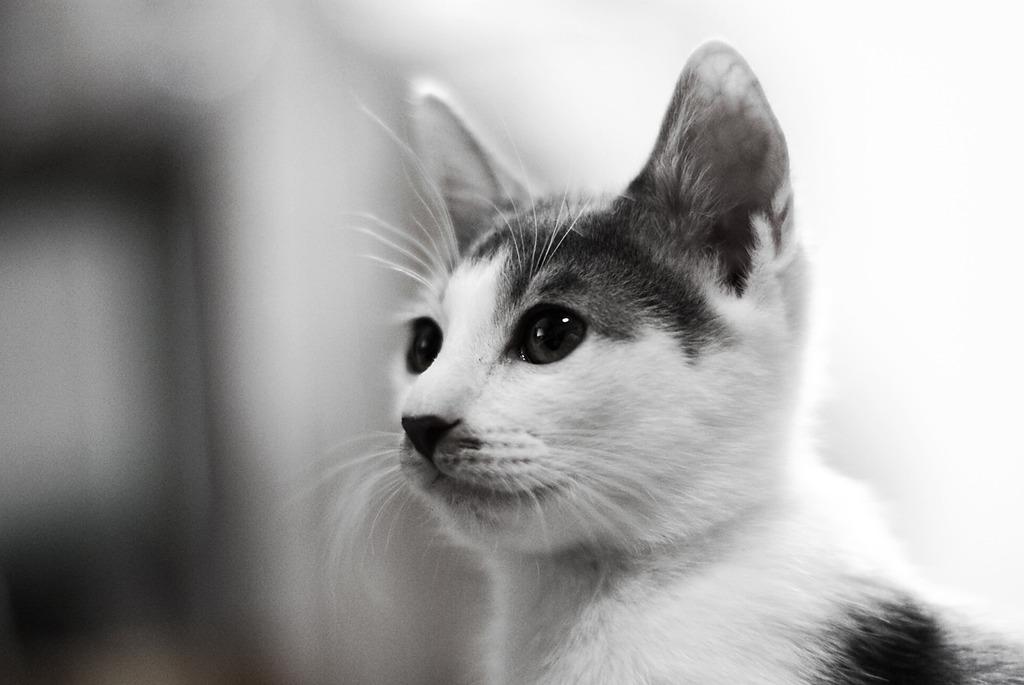 【家猫】ウス