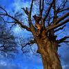 枯れ木の力