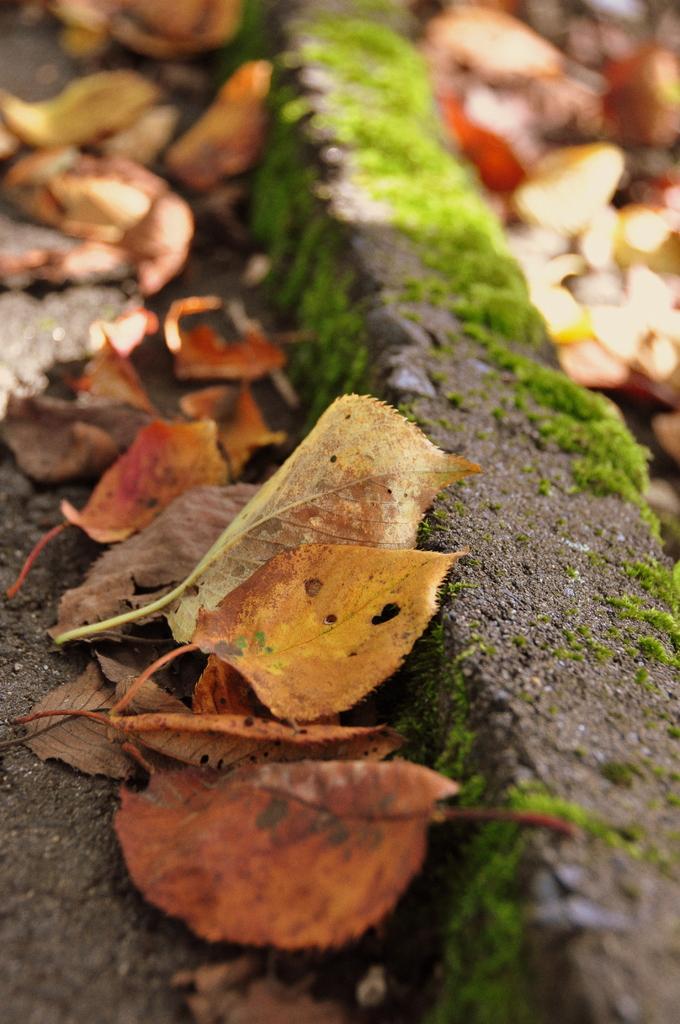 秋の気配 ②